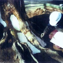 樹木の外科治療の様子